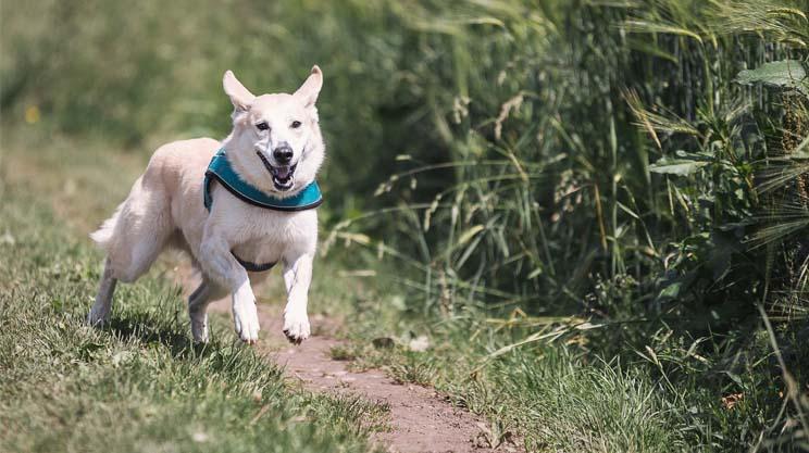 nahrungsergänzung hunde